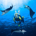Diver and Manta Stock Photography