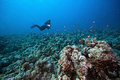 Diver and tropical reef a in the red sea with a scuba swimming in the background Stock Photo
