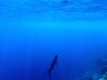 Diver underwater in deep blue sea. Man in diving gear dives up to water surface.