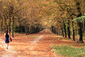 Divergent paths in autumn the grounds of fontainebleau chateau Royalty Free Stock Photo