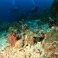 Divers on coral reef Royalty Free Stock Photo