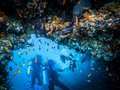 Divers at reef. Marine life Royalty Free Stock Photo