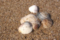 Diverse sea shells collection on sand background the beach Royalty Free Stock Image
