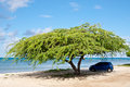 Divi-Divi Tree. Sea. Ocean. Tropics. Caribbean. Stock Images