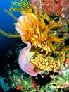 Diving in Dominica. Colorful sponges, corral at depth of 85 ft Royalty Free Stock Photo
