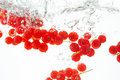 Diving red currants Stock Photo