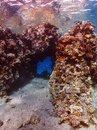 Diving in underwater coral reef world Royalty Free Stock Photo