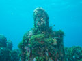 Diving at the underwater museum cancun off coast of mexico Stock Photography