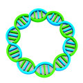 Dna chain in d white background Stock Photos