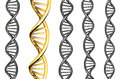 Dna gold outstanding from silver dna isolated on white background d rendered Stock Photography