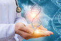 DNA in the hands of a doctor. Royalty Free Stock Photo