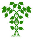Dna nature plant green tree illustration with the trees or vines forming a double helix Stock Image