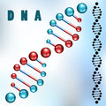 Dna strand closeup and silhouette Stock Images