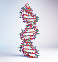 Dna strand model highly detailed Royalty Free Stock Image