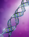 DNA Strands -  dual helix Royalty Free Stock Image