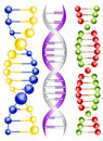 Dna vector illustration of double helix Stock Photography