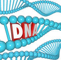 Dna word strand genetics heredity medical research a of with the letters or within it to illustrate and Stock Photos