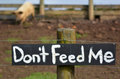 Do not feed me sign on pig pen pigs with hungry greedy in the background concept photo Stock Images