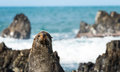 Do seal simle one new zealand posing but not smiling Stock Photography