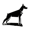 Doberman black and white silhouette of a dog with a dumbbell on the neck Stock Photography