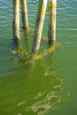 Dock pilings in clear clean waters on the new england coast of maine Stock Image