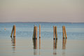 Dock pilings on penobscot bay inside the rockland breakwater and harbor with nesting seagulls sitting Stock Photos