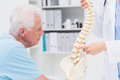 Doctor explaining anatomical spine to senior man cropped image of female in clinic Royalty Free Stock Photo
