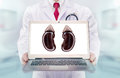 Doctor with stethoscope in a hospital. Kidneys on the laptop monitor Royalty Free Stock Photo