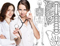 Doctor woman pointing on drawing human skeleton. Royalty Free Stock Photo