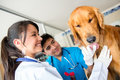 Doctors checking a friendly dog at the vet Stock Photography