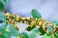 Sacudir género les plantas