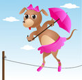 Dog acrobat on rope with pink umbrella Royalty Free Stock Photo