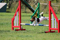 Dog agility a jack russel that jumps an obstacle of Royalty Free Stock Photo