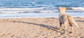 The dog alone on the beach sand looking out to sea. Royalty Free Stock Photo