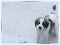 Dog animal on concreet background Royalty Free Stock Photos