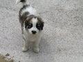 Dog animal on concreet background Stock Image