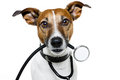 Dog as doctor Royalty Free Stock Photo