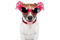 Dog as drag queen Stock Photo
