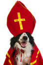 Dog as Dutch Sinterklaas Royalty Free Stock Image