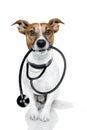 Dog as a nurse Stock Image