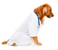 Dog as a vet cute dressed isolated over white background Royalty Free Stock Image