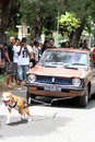 Dog attraction pitbul pull a car carrying six people when in solo Royalty Free Stock Images