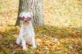 Dog on the autumn sun Royalty Free Stock Photo