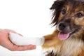 Dog with bandage with paw Royalty Free Stock Photo