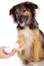 Dog with bandage with paw beautiful Royalty Free Stock Photography