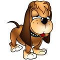 Dog Baset Stock Image