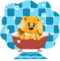 The dog bathes. Royalty Free Stock Photography