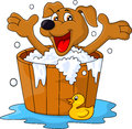 Dog bathing time Royalty Free Stock Photography