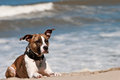 Dog at the Beach Stock Photos