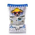 Dog beach chair Royalty Free Stock Photo
